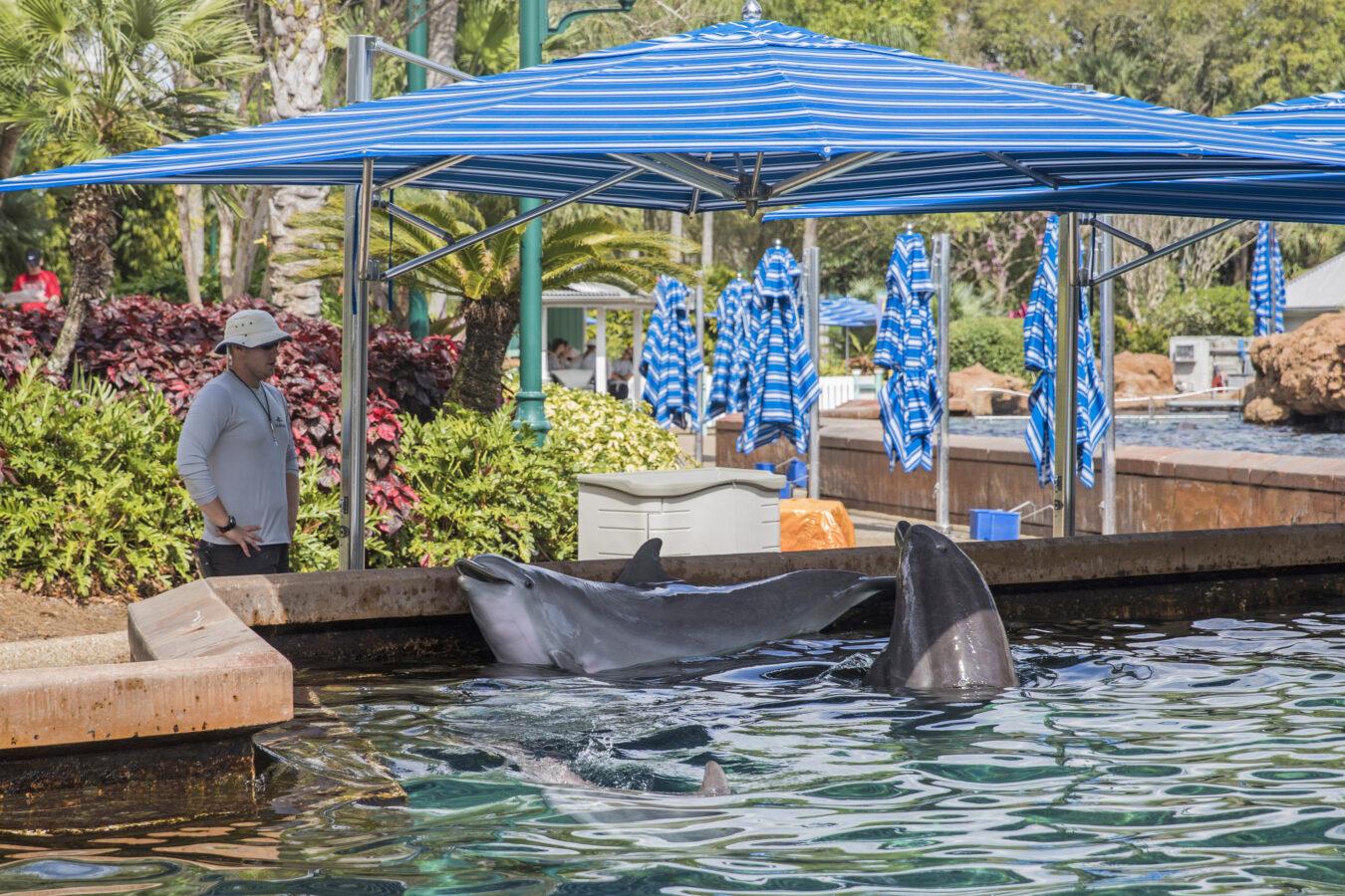 Seaworld Dolphin Pool